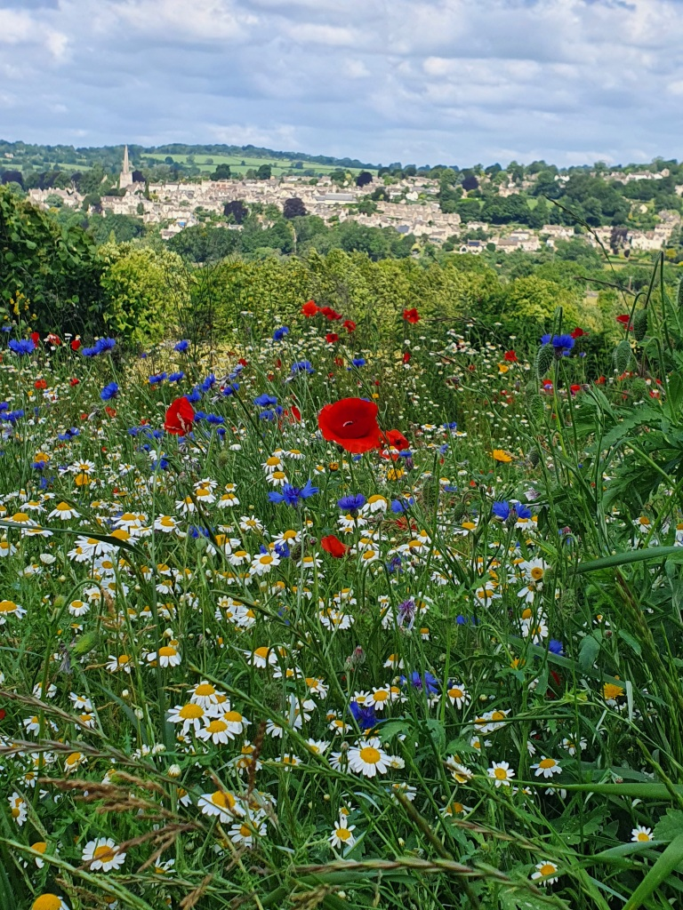 View of Painswick and meadow flowers
